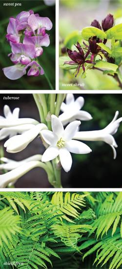 Garden_Passalong_RV-S2018-2