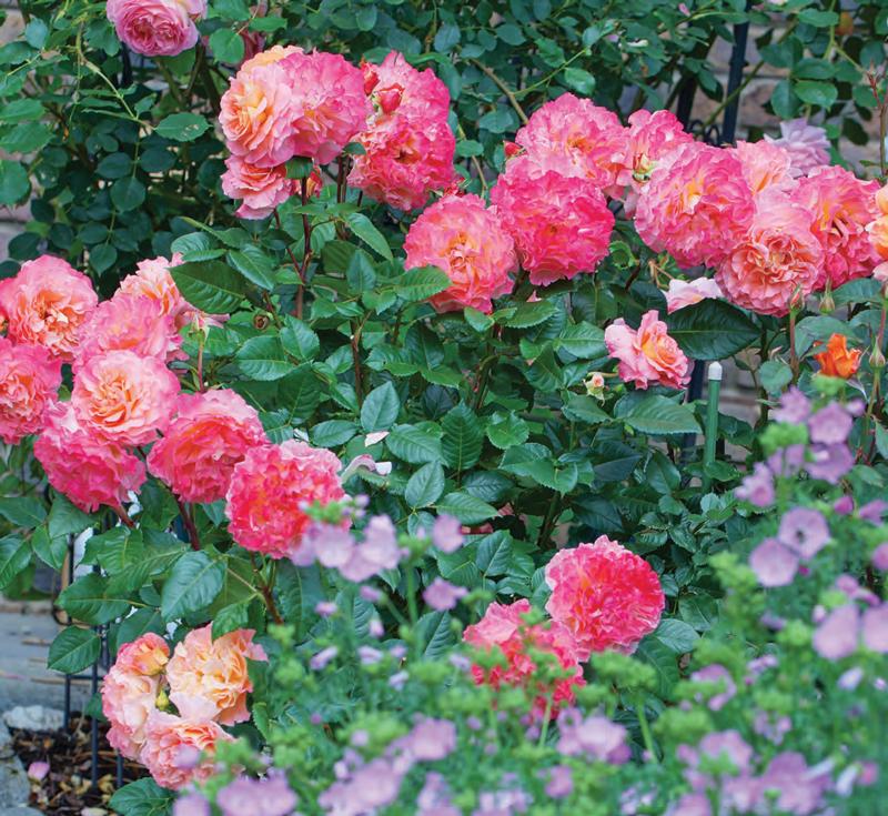Garden_english_RV-S2018-1