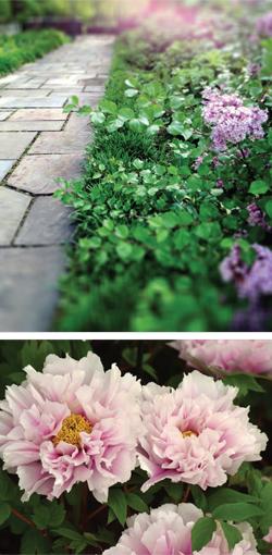 Garden_english_RV-S2018-2