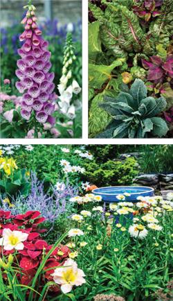 Garden_english_RV-S2018-3