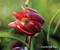 Garden_Blooms2